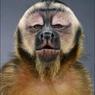 maymuniak