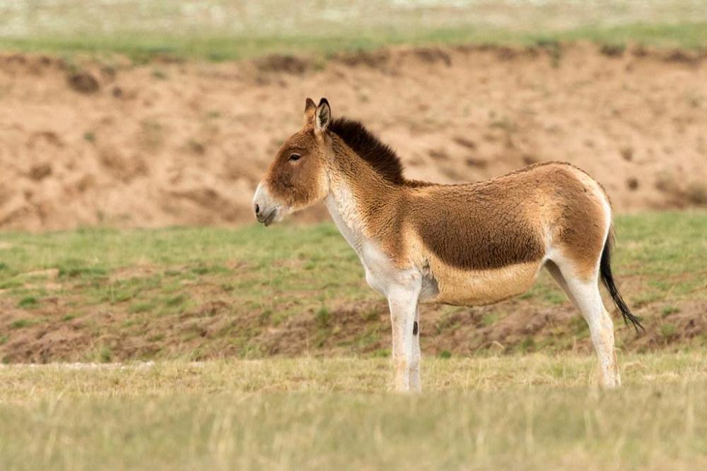 958669092_(Equuskiang).thumb.jpg.824b0735f3b8f73fbb12ee0db32da902.jpg