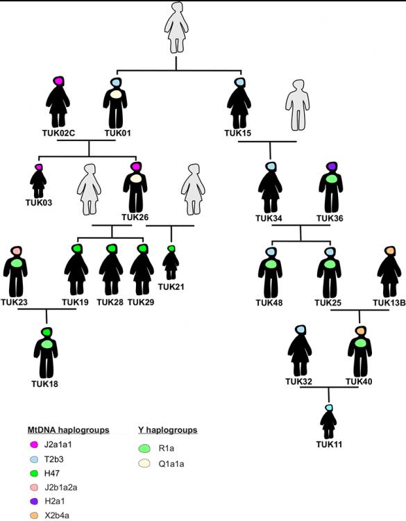 xiongnu-family-genealogy.thumb.png.b77ccac4c6ed265ecdf1fc09c0ada886.png