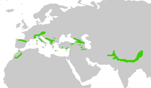Pyrrhocoraxgraculusmap.png