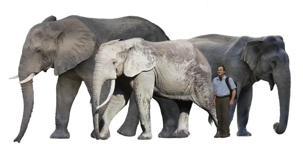 SpeciesComparison.jpg